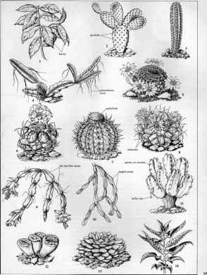 Types Succulents
