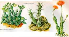Cactus Encyclopedia Pictures